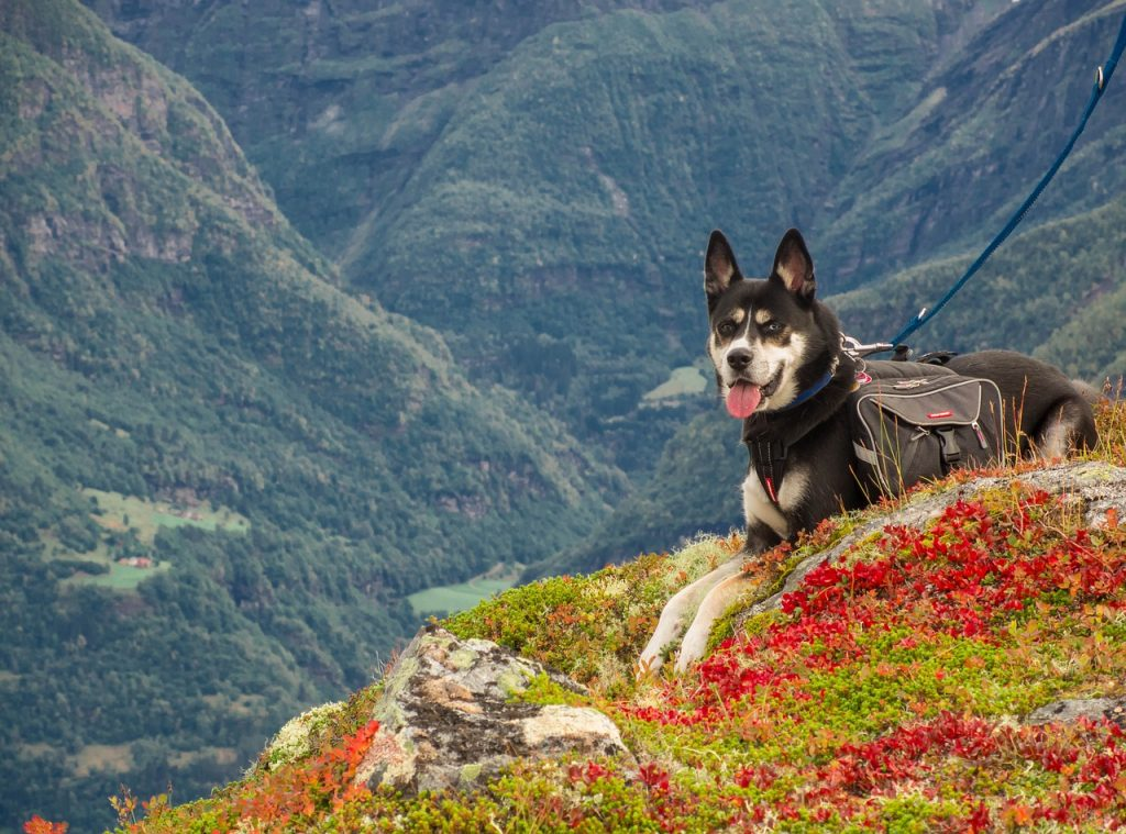 30 Best Dog-Friendly Destinations in the Northeast | Best RV