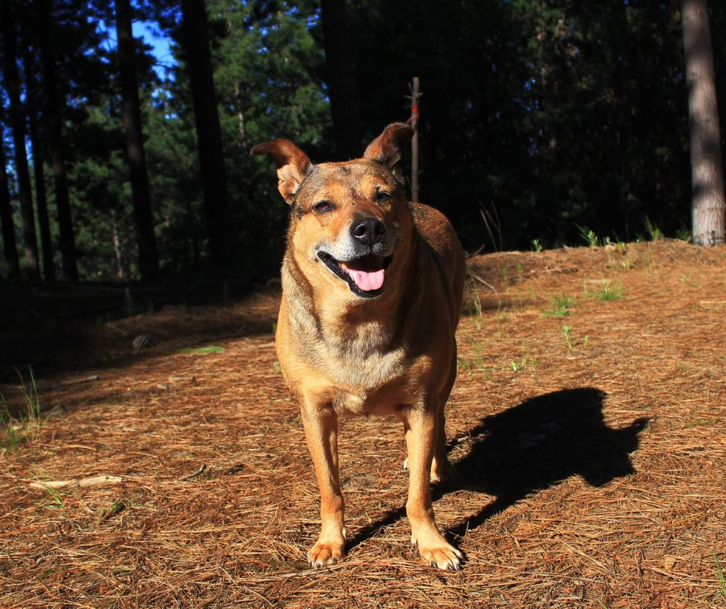 Way up north, along the California coast, is the dog-friendly destination  of Fort Bragg. There are lots of camp sites and hotels here where dogs are  welcome ...