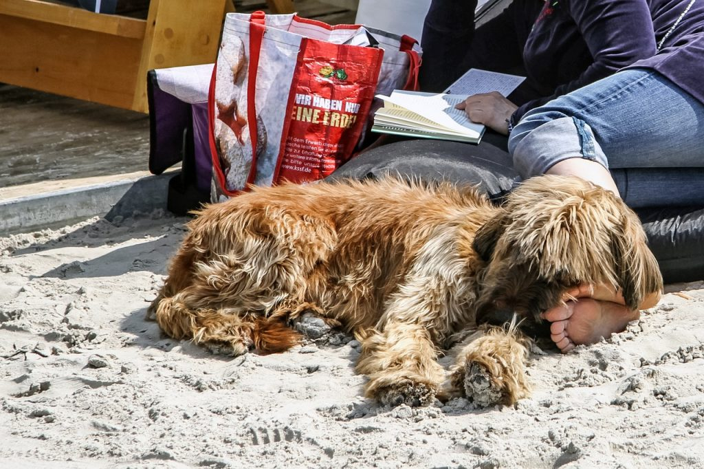 Those Traveling With Dogs Shouldn T Have Too Much Trouble Finding Dog Friendly Restaurants And Accommodations Here